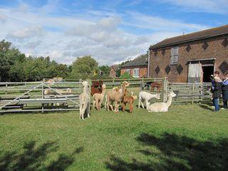 Toft Alpaca Farm