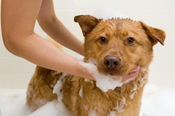 Pet Care with Eucalan | Eucalan.com